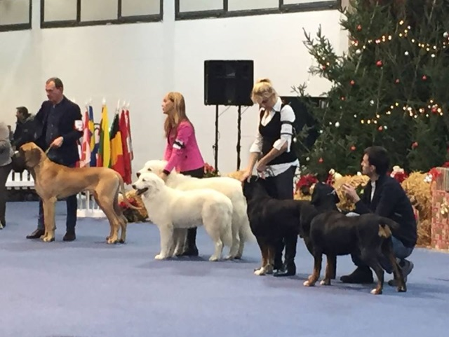 Rubino & Ombra together at the International dogshow in Wels, Austria - December2016