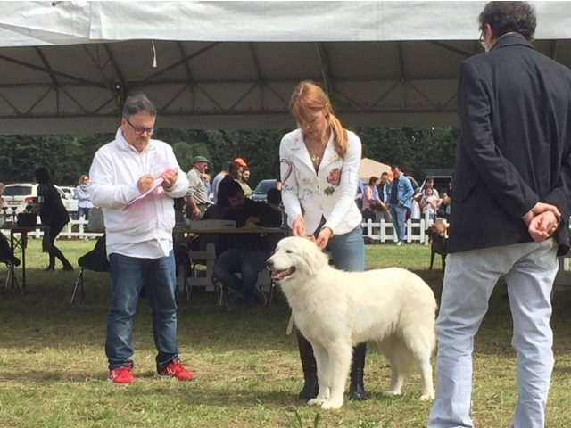 Ombra & her handler Sabrina Vitali at the Italian Breed Expo Firenze 2016